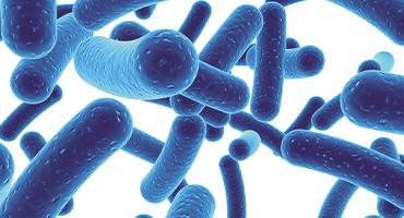 Les prébiotiques et probiotiques