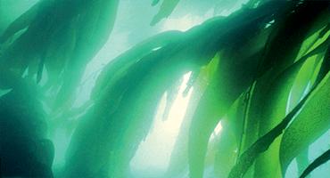 Les algues, une véritable source nutritionnelle & micronutritionnelle