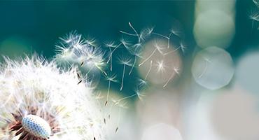 Agir sur le système immunitaire pour éviter les allergies saisonnières