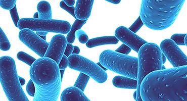 Flore intestinale : les liens étroits entre microbiote et cerveau