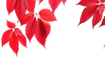 Stress de la rentrée, automne… Comment bien se préparer