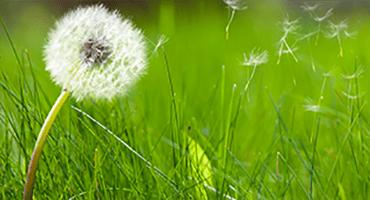 Pic de pollen : les bons gestes à adopter