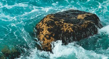 La PHYCO-ARL NG : un bio-actif marin aux propriétés exceptionnelles