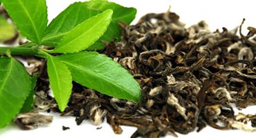 Le thé vert, un actif ancestral aux vertus remarquables