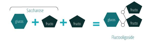 Fructo-oligosides