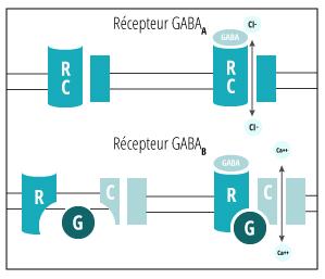 Récepteur GABA