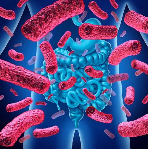 Microbiote-bactéries