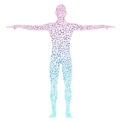 Corps humain et système nerveux
