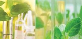 éprouvette et plantes