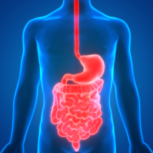 tube digestif