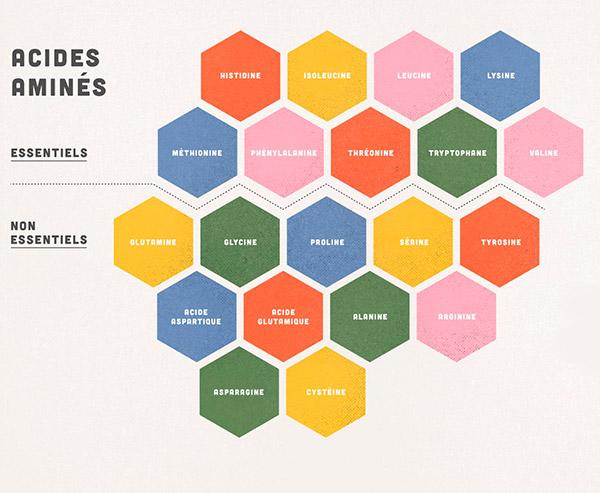 Tous les acides aminés